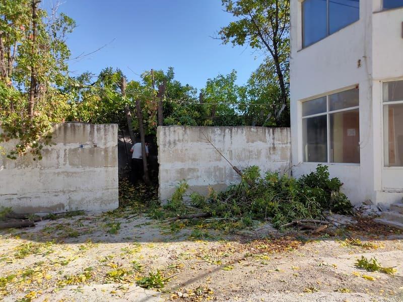 Спил деревьев в Анапе