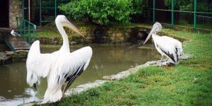 Анапа Парк живой природы «ДоДо»