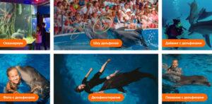 Достопримечательности в Анапе дельфинарий-океанариум