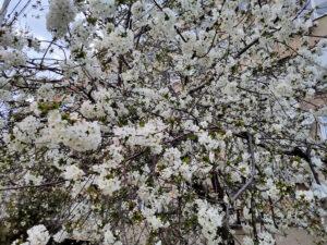 Анапа весна майские праздники