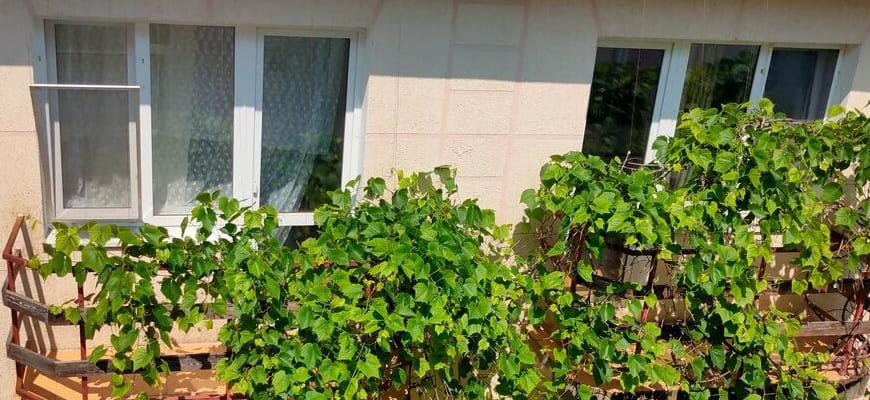 Купить недорогое жилье в Анапе